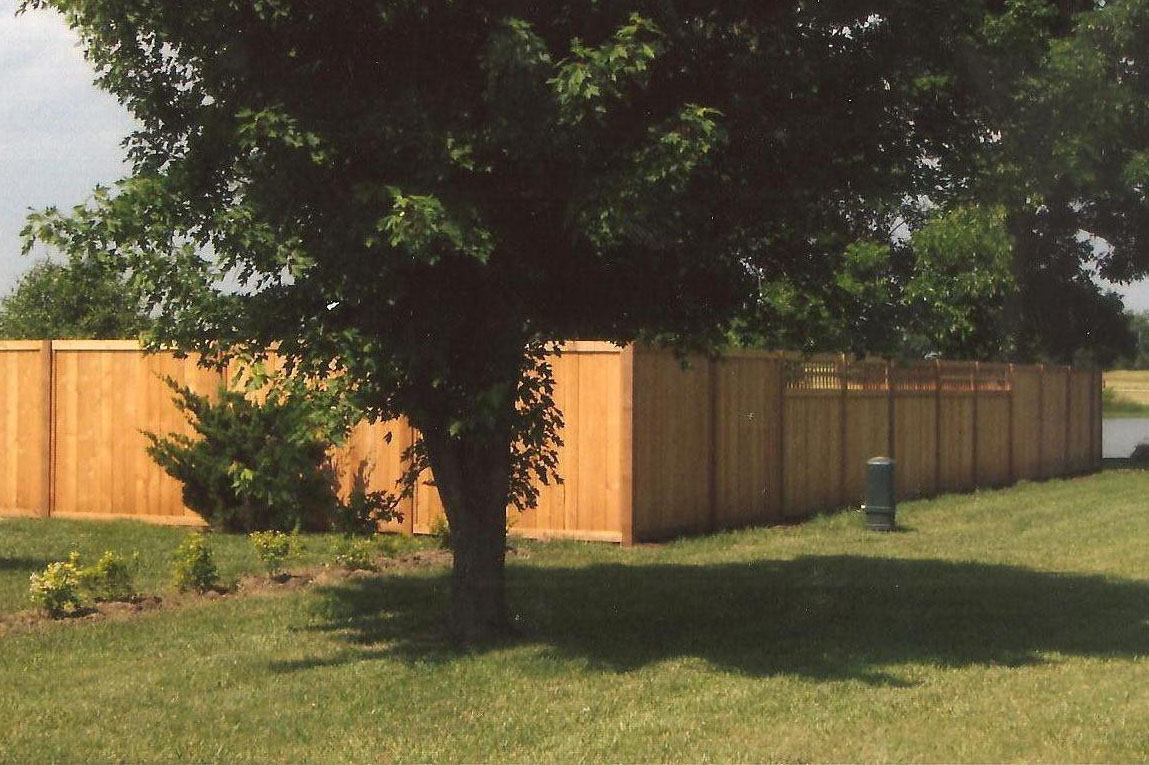 fence and yard 2